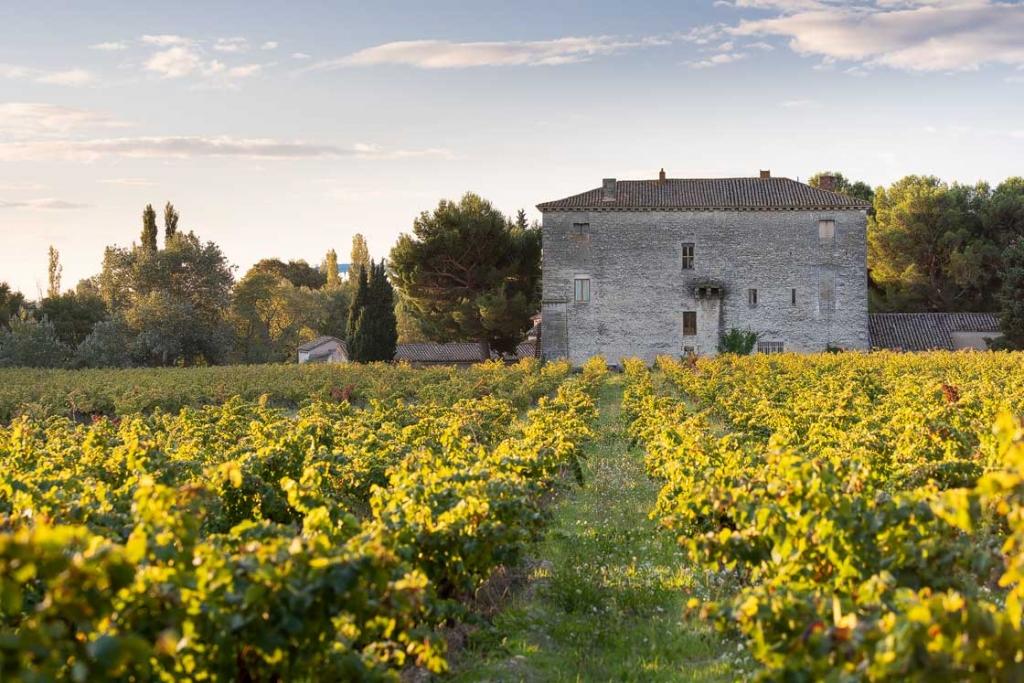 Photographie du domaine d'Escarvaillac au levé du soleil, les vignes ont encore leur feuillage vert